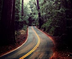 """39 of the world's most inspiring routes for road trips. California Hwy 236 The terrain doesn't have to be barren for a road to still feel """"open."""" Here's California Hwy heading towards Big Basin Redwoods State Park. Infp, Make Me Happy, Make Me Smile, On The Road Again, Justgirlythings, Describe Me, Reasons To Smile, Thats The Way, Roadtrip"""