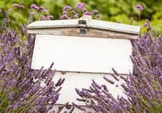 How to Keep Bees in Your Own Backyard — Old School