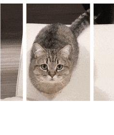 Cat Knocks Over Animation Frame