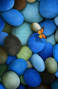 blue stones with orange butterfly
