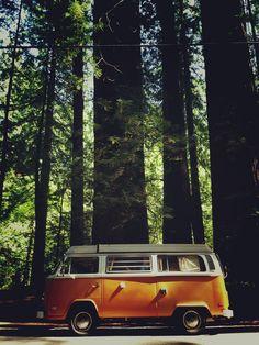 VW camper van   Redwoods in Northern California, by Markus Spiering