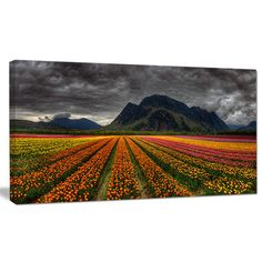 "DesignArt 'Beautiful Colored Tulips Panorama' Photographic Print on Wrapped Canvas Size: 28"" H x 60"" W x 1.5"" D"