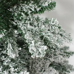 Purchase the fantastic Snow Covered flocked Downswept Artificial Christmas Tree by Festive Lights - Christmas Trees online today. Christmas Trees Online, Flocked Artificial Christmas Trees, Fake Trees, Flocking, Festive, Snow, Lights, Holidays