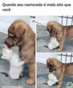 Funny Memes Of The Day – 26 Pics funny Funny Animal Memes, Cute Funny Animals, Funny Jokes, Animals And Pets, Baby Animals, Funny Images, Funny Pictures, Comedy Memes, Kawaii