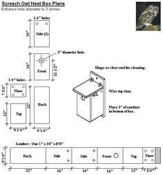 Design  This is an excellent time of the year to build a Screech owl box if you have the time. If you don't want to build a box there are a ...