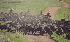 #Montana cowboys and cowgirls at Wang Ranch Branding. ~ Montana Stockgrowers Association ~