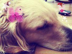 Princess golden retriever dog ;)