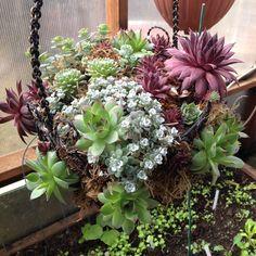 Succulent basket started 8 months ago.