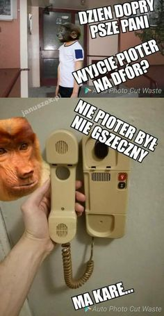 Nosacz -małpa Janusz Piotrek Very Funny Memes, Meme Meme, Life Decisions, Einstein, Haha, Sisters, Humor, Hilarious Memes, Humour