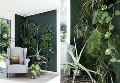 Sådan laver du en grøn væg - plantevæg