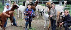 The Shotter boys — Mason, left, Daylin, Alex and Cody — show their alpacas.  |  Christalee Froese photo