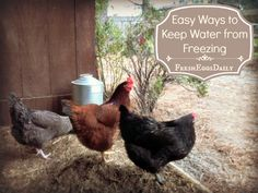Fresh Eggs Daily®: Five Easy Ways to Keep your Chickens' Water from Freezing this Winter