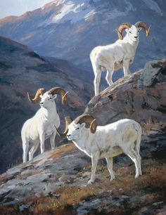 Ken Carlson, Rams of the Wrangells (2001), oil, 45 x 35. Collection of Ed Wright.