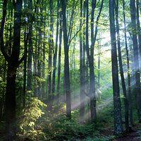 Rumanía: el futuro verde de Europa #turismoeuropeo En las vastas montañas y densos bosques que recubren el corazón de Rumanía se conserva uno de los últimos rincones vírgenes de Europa