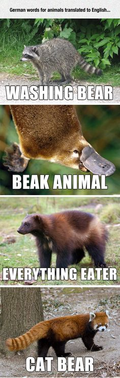 Some Literal Translations for wild animals