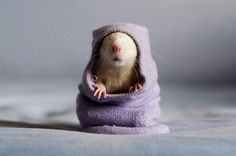 10 Reasons To Forget Your Fears And Fall In Love With Rats