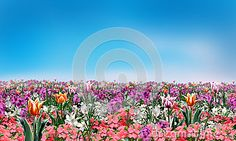 Spring flowers and light blue sky abstract background. Digital Illustration. Spring Holiday pattern with spring flowers. For Art, web, print, wallpaper, greeting card, textile, fashion, fabric, texture, Home decor and more graphic design