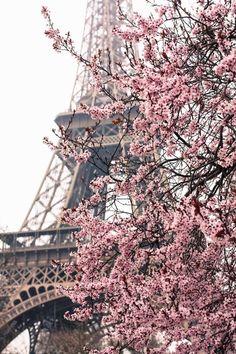 Svenngården: When in Paris