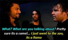 Camel.  No it's llama. What!? It's a lamb!