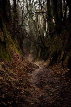 Scary forest by Mateusz Strzeszewski Forest Photography, Landscape Photography, Ocean Photography, Photography Tips, Wedding Photography, Haunted Forest, Magical Forest, Beautiful Forest, Destination Voyage