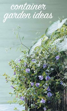 Container Garden Ideas | Martha Stewart Living - A wooden window box anchors this planting without detracting from the delicate leaves and flowers. Aaron Caladium (Caladium 'Aaron'); Diamond Frost Euphorbia (Euphorbia hypericifolia 'Diamond Frost'); Wishbone Flower (Torenia Summer Wave Blue)