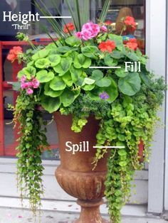 garden pots Height-Spill-Fill-Container-Gardening 10 Fabulous Tips for Annual Flowers Beautiful Gardens, Beautiful Flowers, Beautiful Beautiful, Pot Jardin, Annual Flowers, Cactus Y Suculentas, Container Flowers, Full Sun Container Plants, Succulent Containers