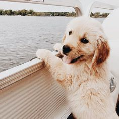 Golden Retriever Puppy on a boat is just the cutest! This Golden Retriever Puppy on a boat is just the cutest! This Golden Retriever Puppy on a boat is just the cutest! Cute Little Animals, Cute Funny Animals, Funny Dogs, Funny Puppies, Cute Dogs And Puppies, Doggies, Puppies Puppies, Cutest Dogs, Cutest Puppy