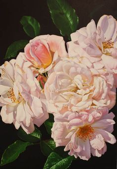 Amber Emm Artworks Available At Black Door Gallery. Photo realistic floral oil paintings with strong contrasting light, depicting the beauty that can be found in our own backyard. Black Doors, Amber, Rose, Gallery, Floral, Artwork, Flowers, Plants, Painting