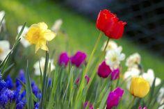 gartenarbeit frühling checkliste für gärtner blumen