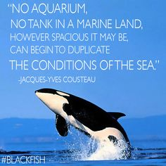 Blackfish - save the orcas! Save Nature Quotes, Jacques Yves Cousteau, Save The Whales, Killer Whales, Sea World, Ocean Life, Animal Rights, Marine Life, Sea Creatures