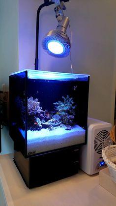 Coral Reef Aquarium, Nano Aquarium, Marine Aquarium, Aquarium Fish, Aquarium Ideas, Saltwater Tank, Saltwater Aquarium, Nano Reef Tank, Reef Tanks