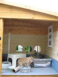 Love how it has been made to look homely with mirrors and picture frames, a great idea. The plastic stall and flower pot are good for bunny hiding! Mini Lop Rabbit, Rabbit Run, House Rabbit, Rabbit Toys, Bunny Rabbit, Bunny Cages, Rabbit Cages, Animal Room, Animal House