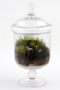 Grazed and Confused terrarium from www.twigterrariums.com
