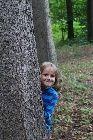 dobrý a krásný večer – Obrázky.cz Trunks, Plants, Drift Wood, Tree Trunks, Plant, Planets