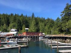 THE 10 BEST Things to Do in Telegraph Cove - UPDATED 2020 - Must See Attractions in Telegraph Cove, BC | TripAdvisor Discovery Island, Stuff To Do, Things To Do, What To Do Today, Boat Tours, Vancouver Island, British Columbia, Wall Collage, Outdoor Activities