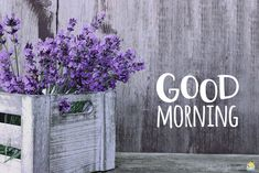 Good morning image with lavender flowers. Good Morning Friday Pictures, Good Morning Quotes For Him, Morning Quotes Images, Good Morning Texts, Happy Morning, Good Morning Gif, Good Morning Picture, Good Morning Flowers, Good Morning Wishes