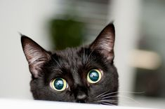 October is Black Cat Awareness Month, so help spread the word about black cats and dispel some of the myths that keep them from finding forever homes! Humane Society, Names For Black Cats, World Cat Day, Black Cat Appreciation Day, Cat Insurance, Cat Ages, Cat Sitter, Pets, Halloween