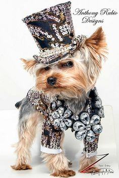 Anthony Rubio Designs - Pet Fashion Meet Rico, a Yorkie.
