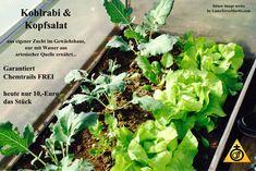 Thema Chemtrails + Ernährung