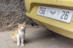 Cats of Maroc Cats, Animals, Morocco, Travel, Marrakech, Travel Tips, Gatos, Animales, Animaux