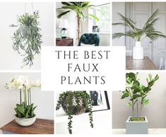 Some of the best faux plants for 2018 from Artificial Green. High quality artificial plants, perfect for unintentional plant killers! Artificial Plants For Sale, Artificial Cactus, Artificial Topiary, Artificial Plant Wall, Bamboo Plants, Faux Plants, Outdoor Plants, Plant Images, Plant Pictures