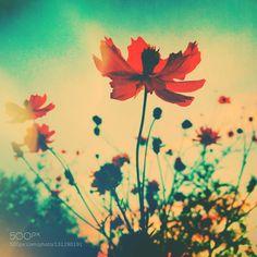 . by lotuscarroll. @go4fotos