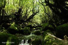 白谷雲水峡の渓流