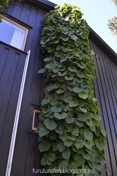 Furulunden: Bli med inn i en hage i harmoni med seg selv og huset den omslutter | Furulunden