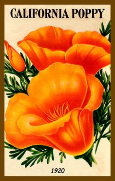 California Poppy kind of Girl