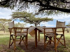Experience wildlife while interacting and observing them of how they contributed in maintaining balance in our ecosystem. Timon And Pumbaa, Simba And Nala, Kenya Africa, Outdoor Furniture Sets, Outdoor Decor, Dark Night, Business Travel, Safari, This Is Us