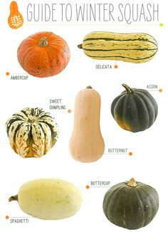 A Guide to Winter Squash. I just love winter squash. Try Giada Delaurentis' Butternut Squash Lasagna. Vegetable Recipes, Vegetarian Recipes, Healthy Recipes, Vegan Vegetarian, Yummy Recipes, Plat Vegan, Sweet Dumplings, Sweet Dumpling Squash, Food Facts