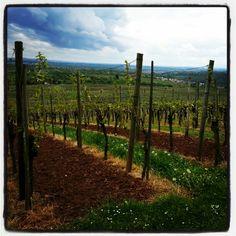 Weinberge Mundelsheim Vineyard, Nature, Outdoor, Wine Vineyards, Outdoors, Naturaleza, Vine Yard, Vineyard Vines, Outdoor Games