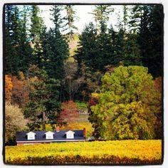 Newberg Oregon Newberg Oregon, Grape Vineyard, Willamette Valley, Beautiful Places, Plants, Photography, Photograph, Fotografie, Photoshoot