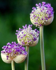 Gorgeous Flowers Garden & Love (Tumblr)